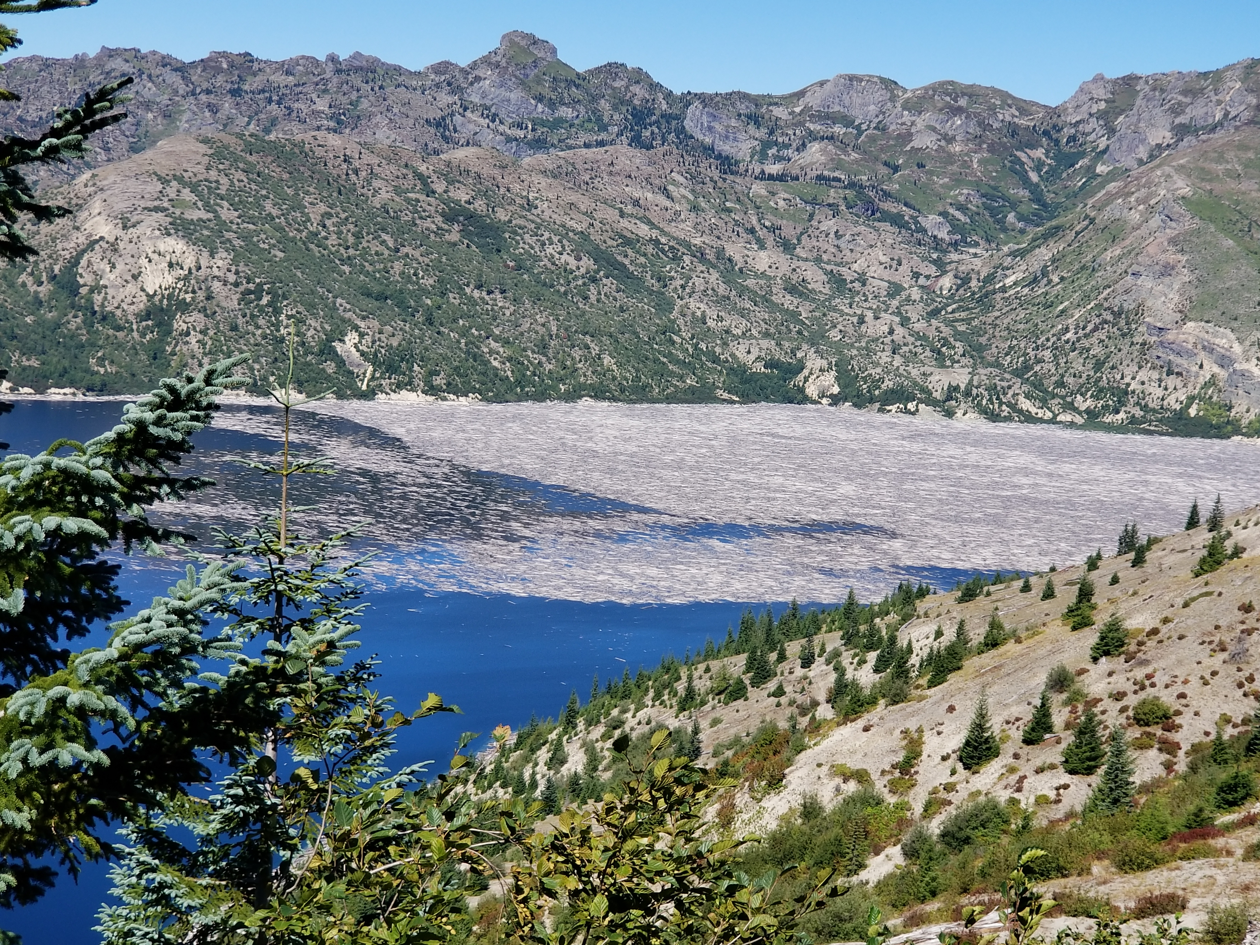2020Sep logs floating in Spirit Lake at Mt St Helens
