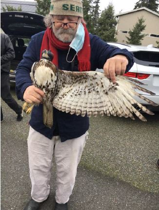 Raptor Biologist Bud Anderson with captured Red Tailed Hawk